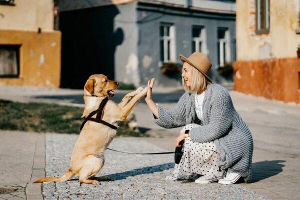 Devenir garde d'animaux ( pet sitter ) en auto entrepreneur